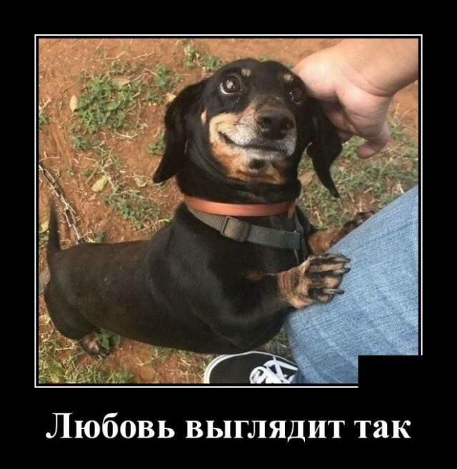 Образ собаки в демотиваторах (18фото)