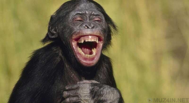 Увлекательные научные находки о смехе (9 фото)