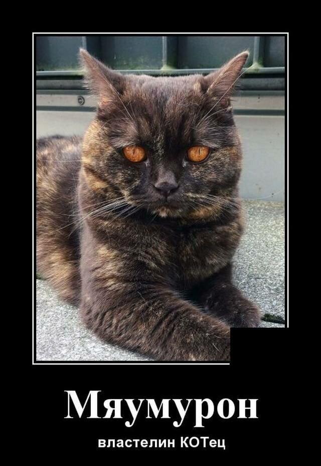 Кошачьи демотиваторы (18фото)