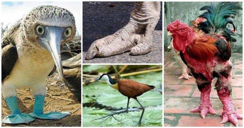15 птиц с самыми удивительными лапами (16фото)