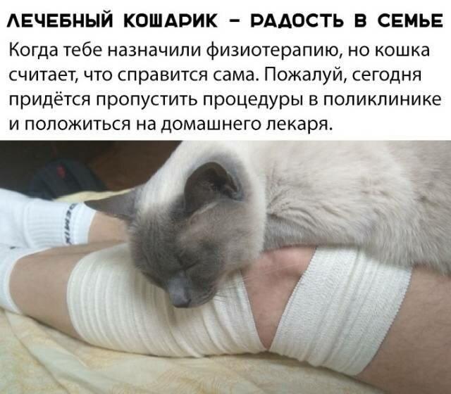 Котовсячина (18фото)