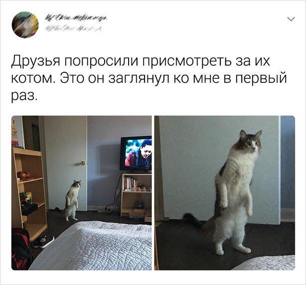 Подборка забавных твитов про котов для утреннего настроения (20фото)