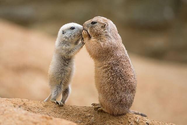 Как животные общаются между собой: 5 самых поразительных способов (9фото+1видео)