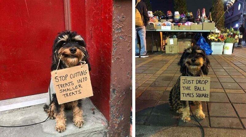 На что жаловались бы собаки, если бы могли писать (13фото)