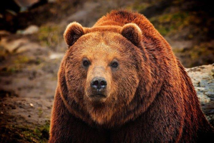 10 самых агрессивных животных на планете (11фото)