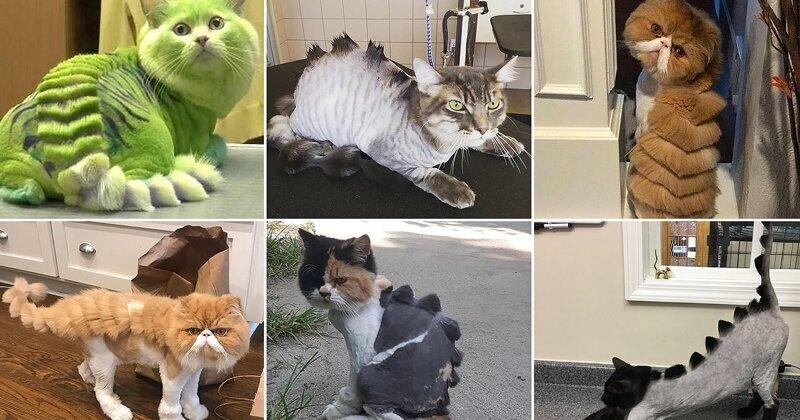 Невероятные превращения кошек в домашних динозавров и драконов (23фото)