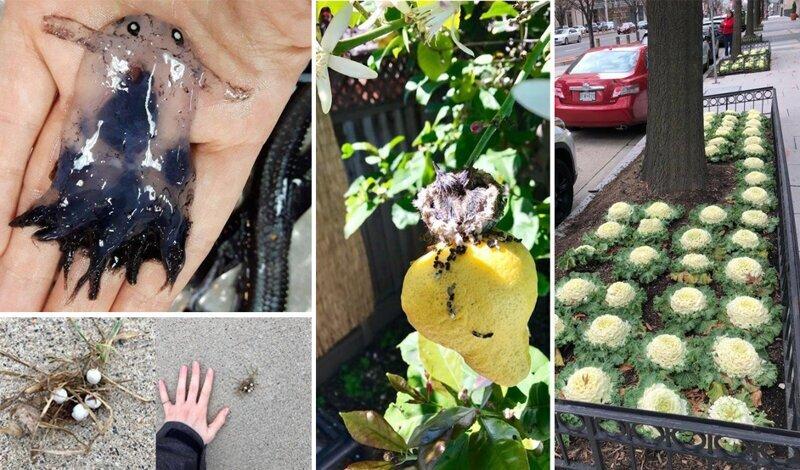 Удивительные вещи, с которыми люди столкнулись в обычной жизни (25фото)