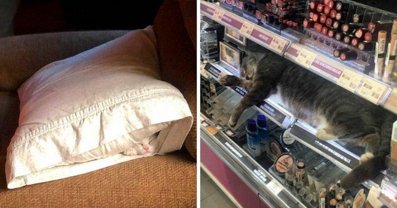 40 кошек, которые заснули в самых неожиданных местах (41фото)