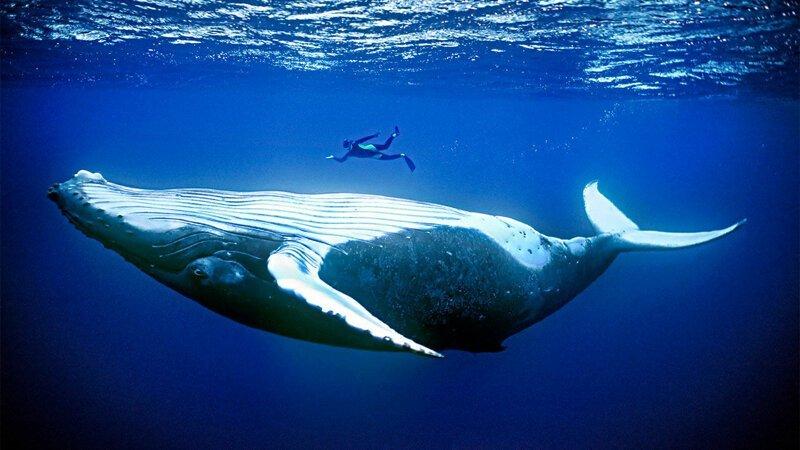 Откуда дельфины и киты получают пресную воду? (6фото)