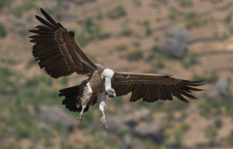 Птицы самого высокого полёта (11фото)