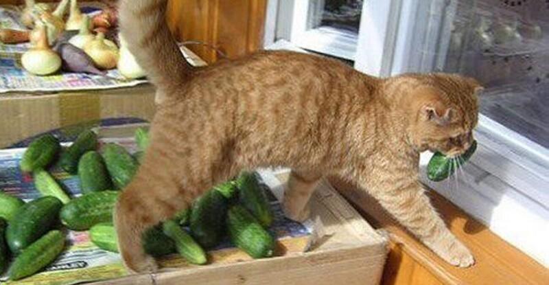 Без кота и жизнь не та! (21фото)