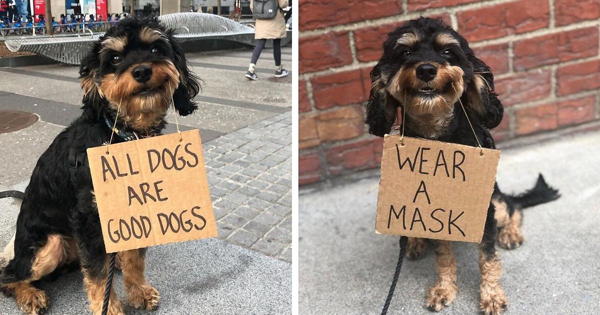 Собачий протест: пес борется за права хвостатых с помощью смешных плакатов (37фото)