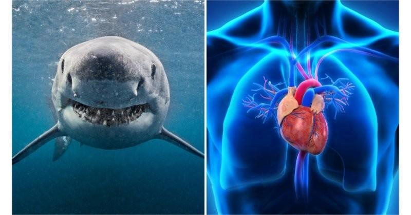 15 познавательных фактов о человеческом теле, которые вас поразят по-настоящему (16фото)