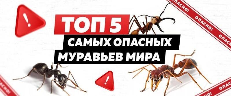 ТОП-5 самых опасных муравьев на планете (6фото)