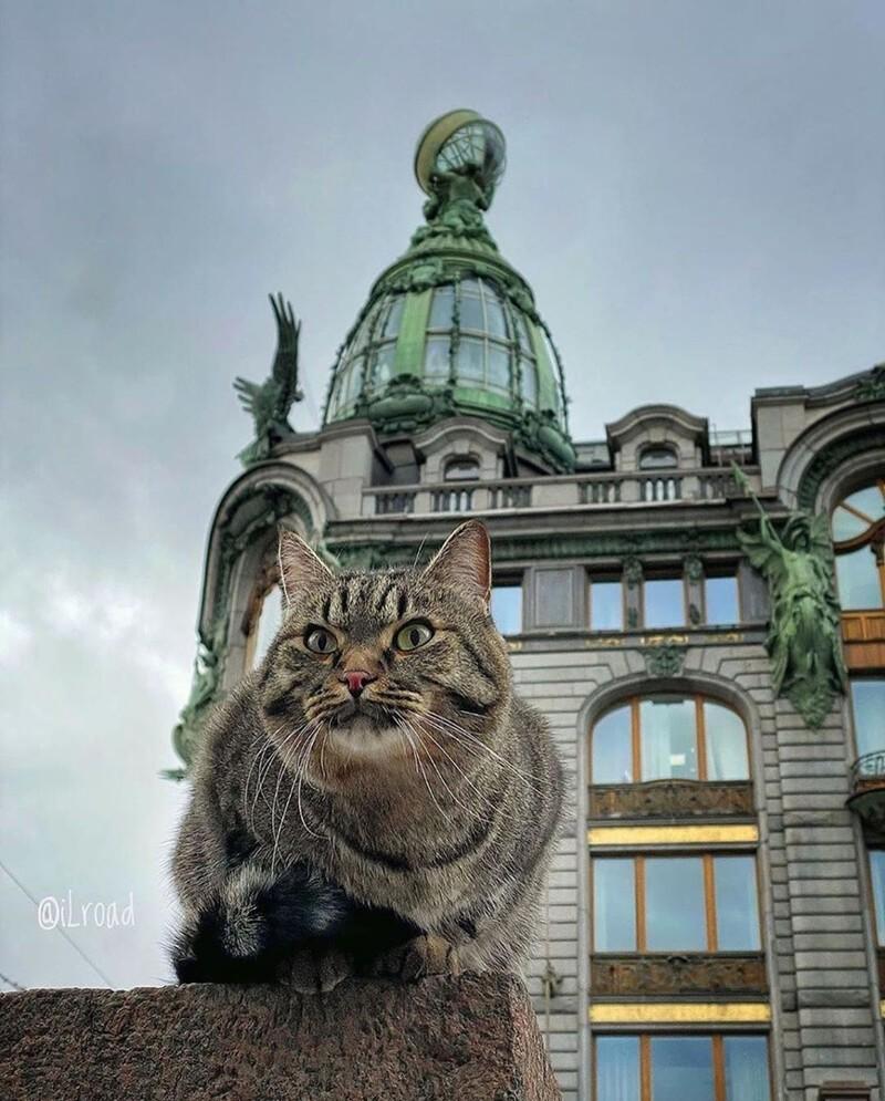 Петербург - город, в котором фотографироваться любят даже домашние животные (8фото)