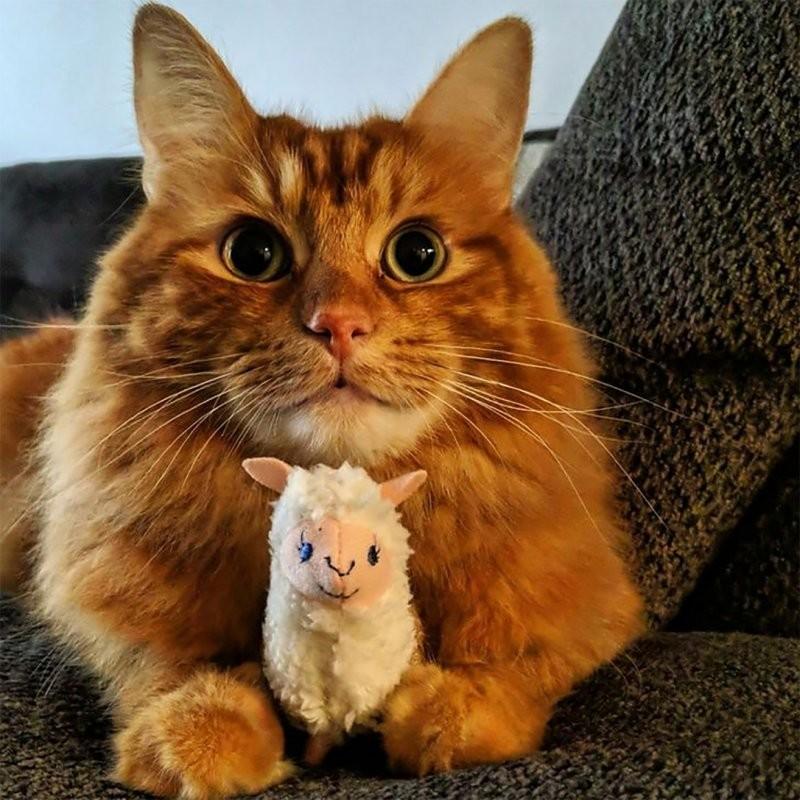 Фотодоказательства, что всем домашним зверушкам очень нужны свои игрушки! (24фото)