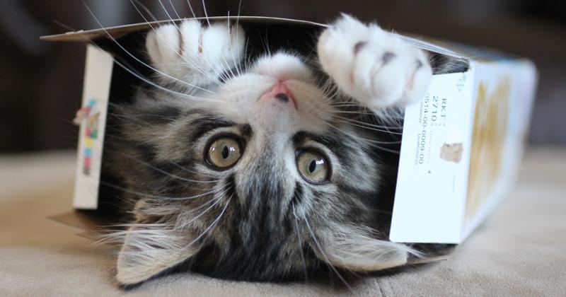 Почему коты так любят коробки? (10фото)