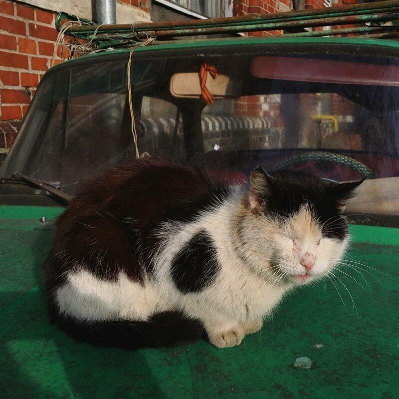 Милые котики всюду (30фото)