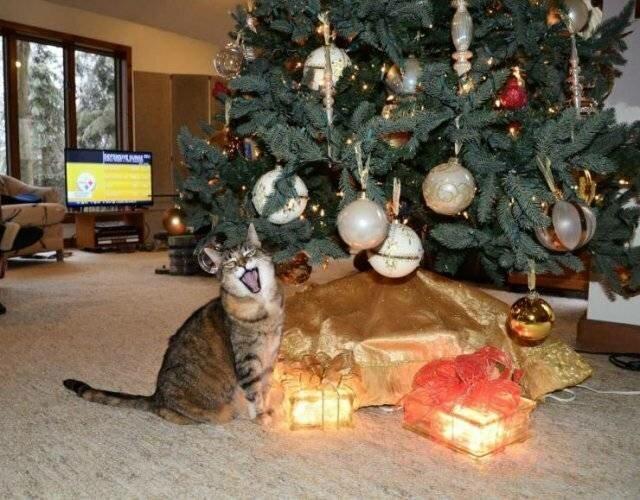 Кошки и елки (18фото)