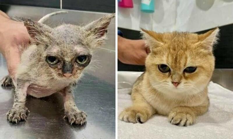 30 вдохновляющих фото кошек и котят до и после спасения (31фото)