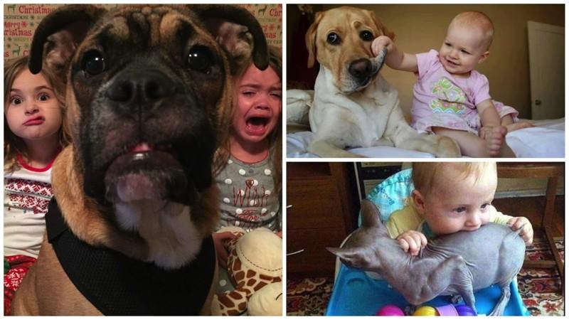 Животные, которые живут с детьми, попадают в рай без очереди (22фото)