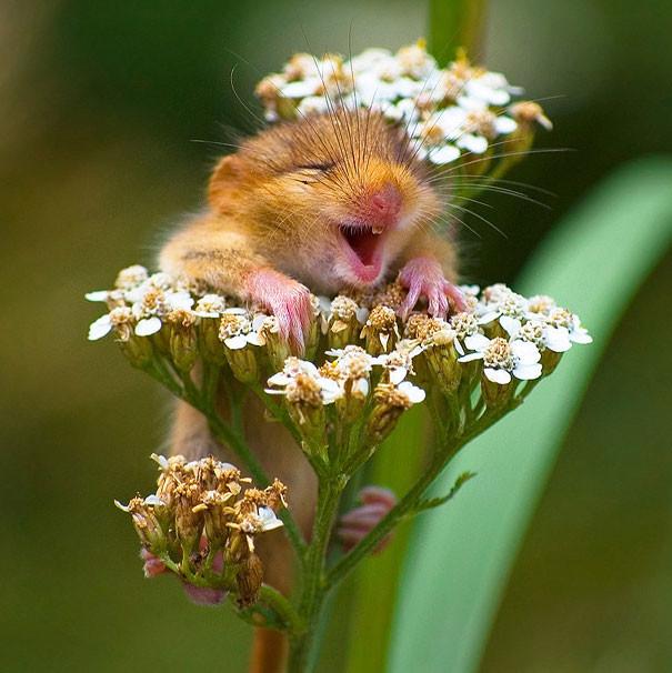 25 улыбающихся животных, которым хочется улыбнуться в ответ (25фото)