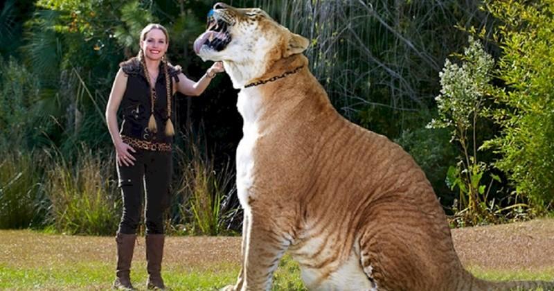 Невероятные животные-гибриды, о которых вы никогда не слышали (14фото)