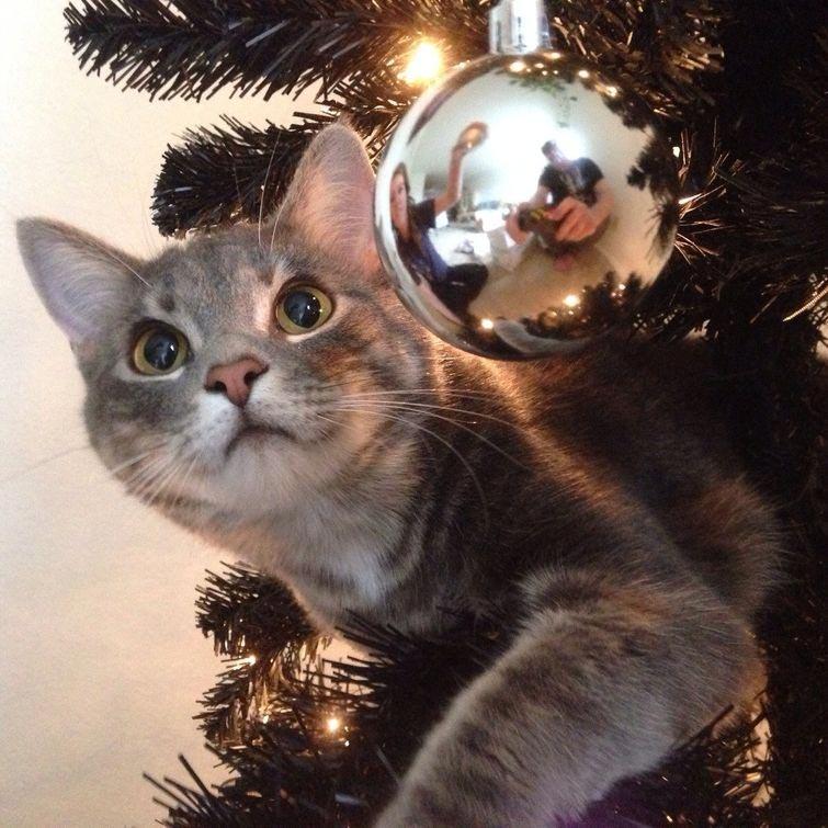 Коты против Рождества или почему новогодние праздники являются любимым временем кошачьих (21 фото)