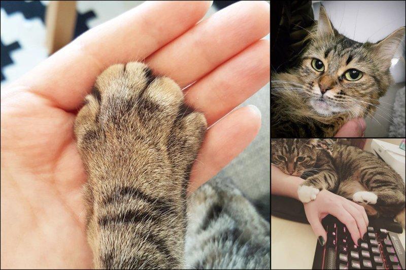 20 диких вещей, которые ты тайно делаешь со своим котиком (21фото)