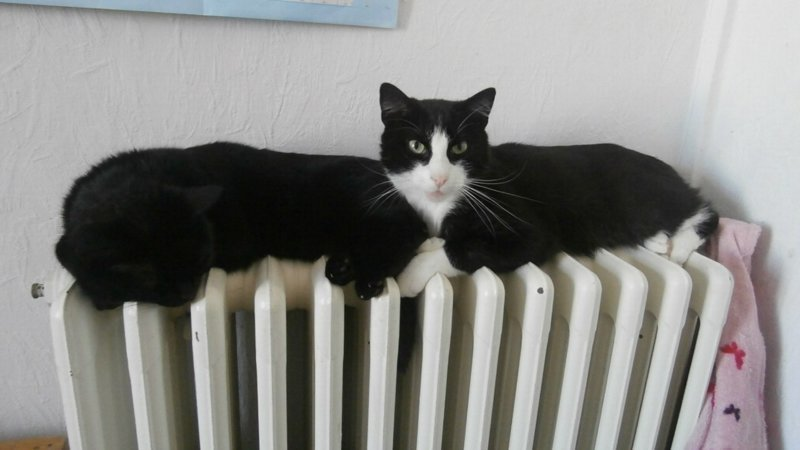 Показалось...прикольные снимки с котами (9фото)
