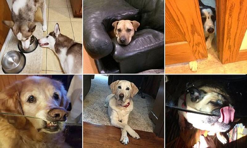 Собаки-хулигаки (29фото)
