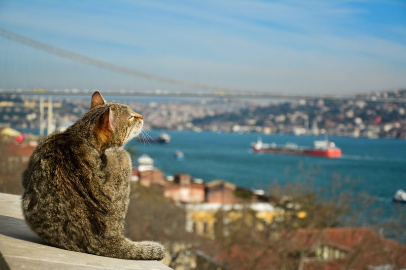 Самые кошачьи города мира: Стамбул (36фото)