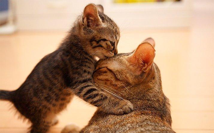 Материнская любовь и забота в животном мире! (31фото)