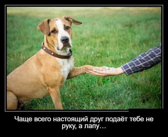 Собачьи демотиваторы (18фото)