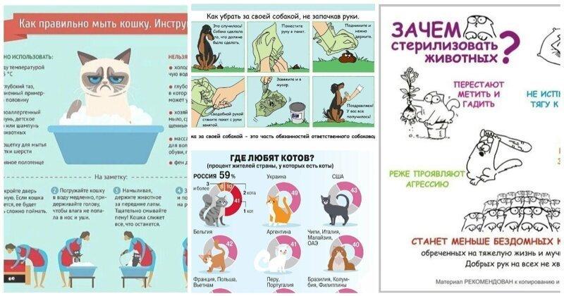 30 занимательных и очень полезных шпаргалок о домашних питомцах (31фото)