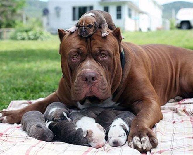 Немного фото собак-мамочек и их малышей (15фото)
