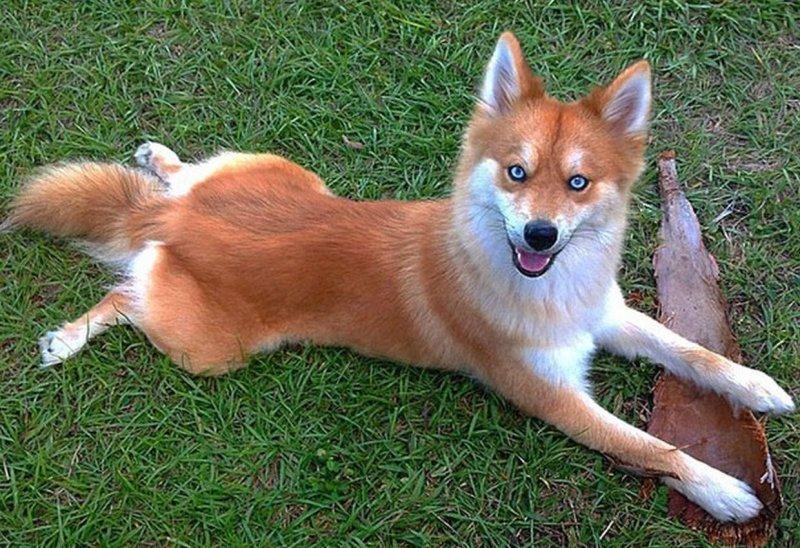 Скрещённые породы собак, которые получились настоящими очаровашками (16фото)