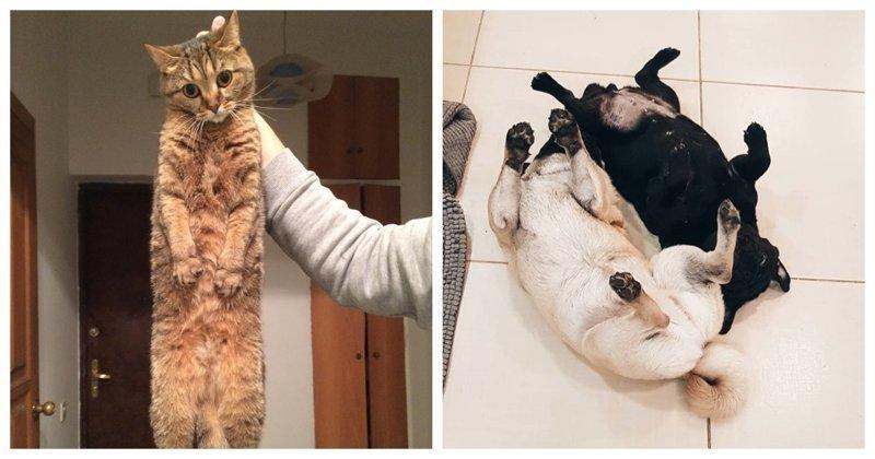 Ко Дню защиты домашних животных (26фото)