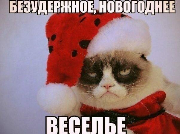 Смешные фото с котами (68фото)