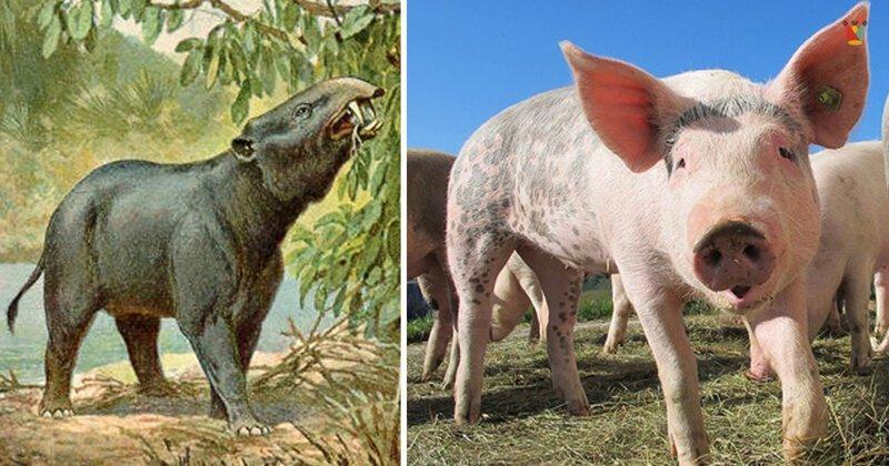 Топ-10: как прежде выглядели знакомые нам животные (11фото)