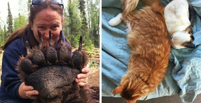 17 фотографий животных, которые на своём примере показывают, что размеры познаются в сравнении (18фото)