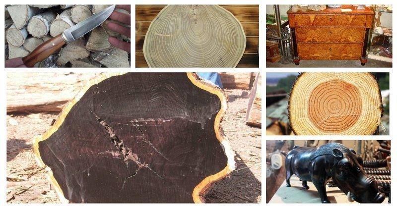 Как будет выглядеть Буратино из разной древесины? (40фото)