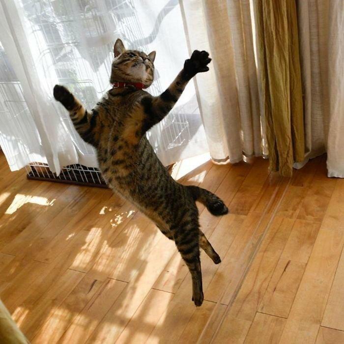 26 танцующих котов, доказывающих, что их грации могут позавидовать даже балерины (26фото)