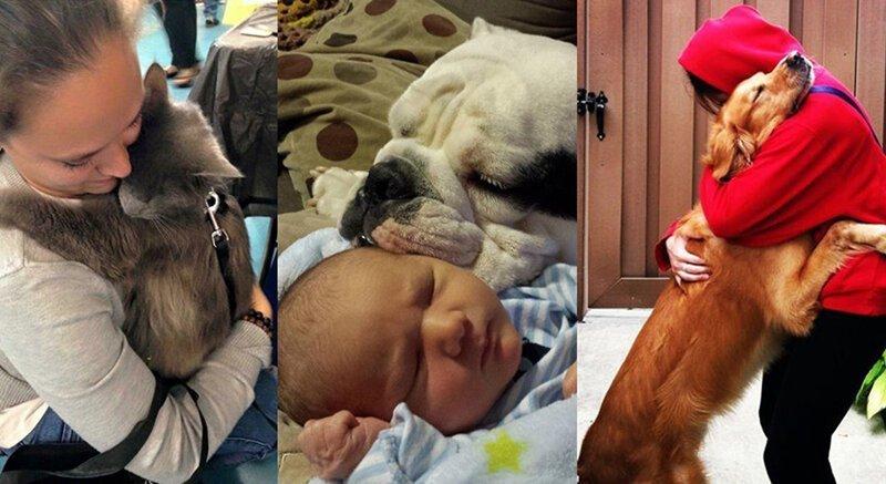 Фотографии безусловной любви домашних животных (21фото)