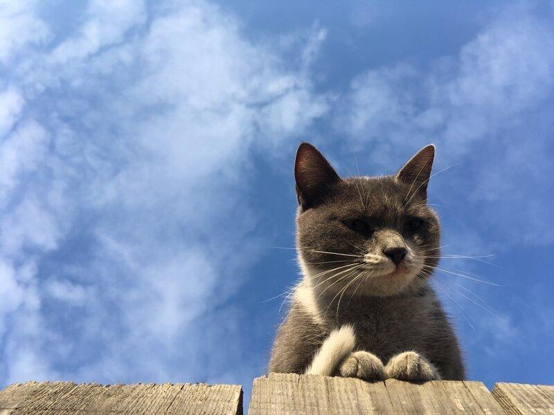 Красивых котиков пост (40фото)