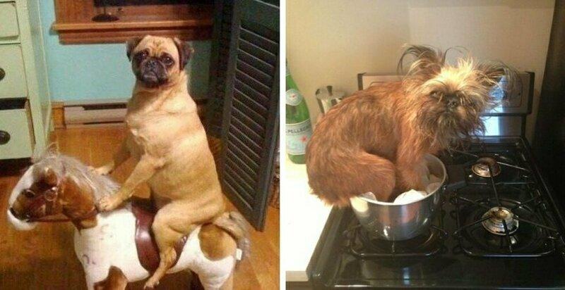 15 примеров того, что делают собаки, когда вас нет дома (16фото)
