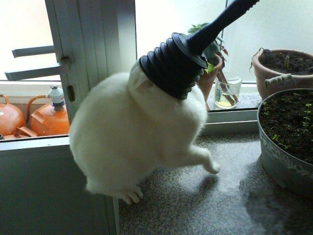 20 смешных котов, встретивших худший день в своей жизни (21фото)