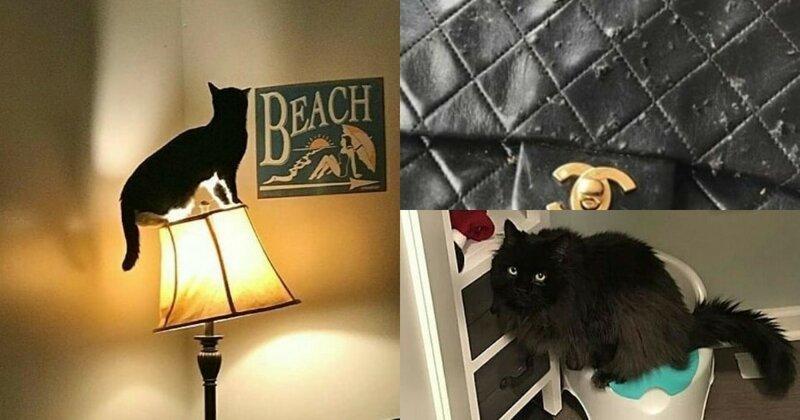Виноватые коты, которые слегка пошалили и немного раскаиваются в этом (нет) (16фото)