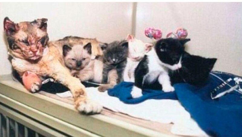 Кошки, от взгляда на которых сжимается сердце (46фото)