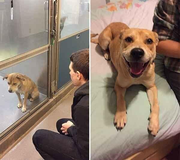Всего один день: приютские собаки до и после обретения семьи (13фото)